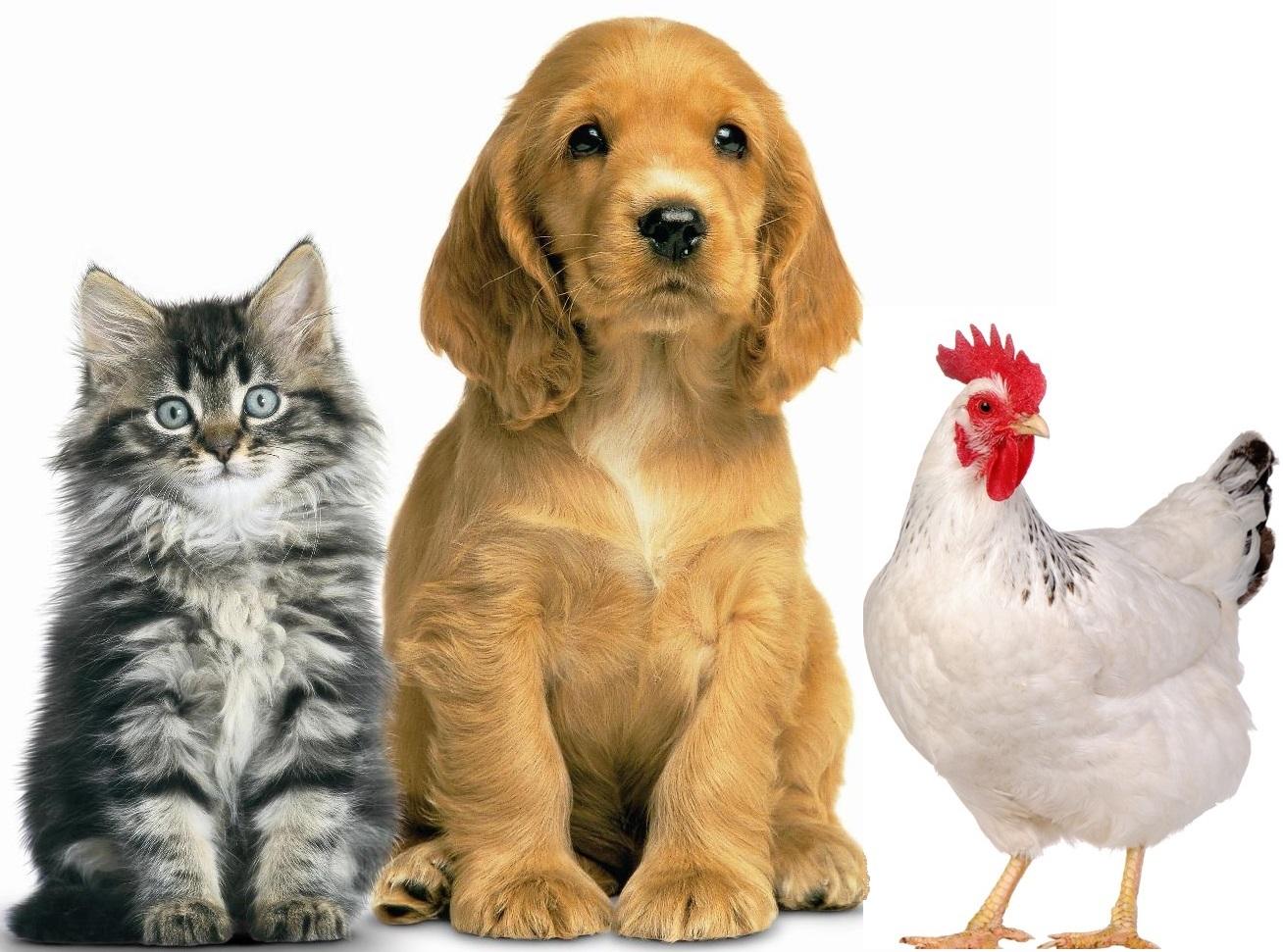 Animal Control Consultation